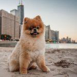Camaras para perros