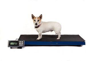 Balanza precision perros