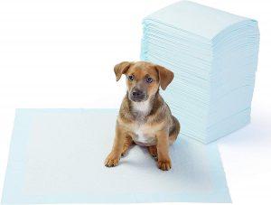 Toallitas entrenamiento perro