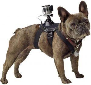 Arnes camara GoPro perro