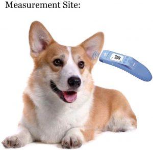 Termometro perro