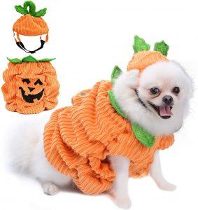 Disfraz calabaza perro