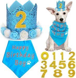 Cumpleanos azul para perro