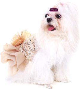 Disfraz princesa perro